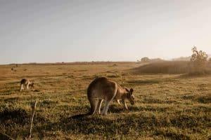 עבודה בחוות באוסטרליה